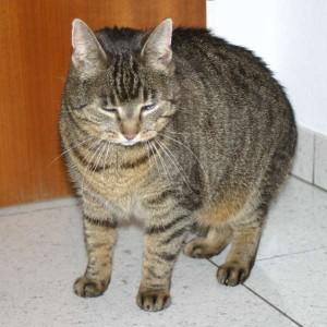 Katze828_Emelie2