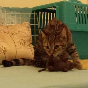 Kätzchen Cuddy