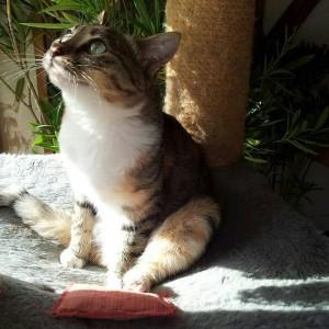 Katze Hope
