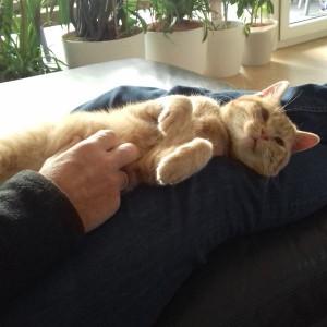 Katze839_Phönix1