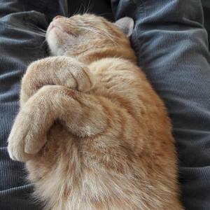 Katze839_Phönix4