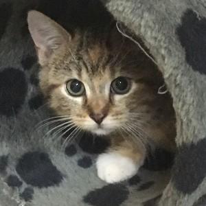 Kätzchen Molly
