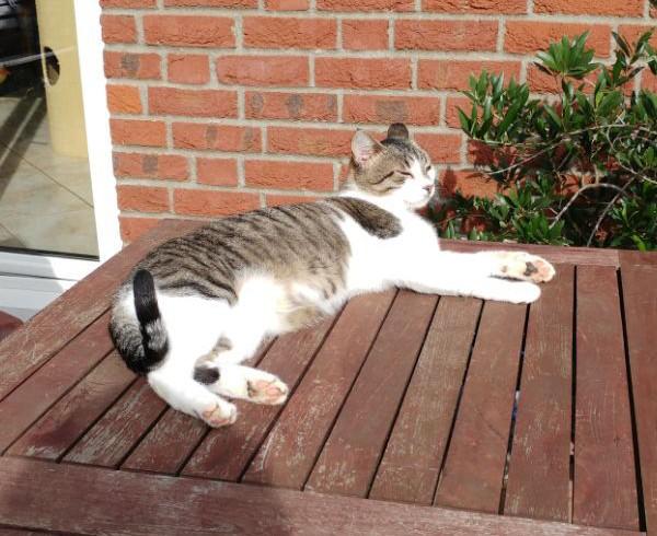 Hilfreiche Tipps für Katzen in der Sommerhitze