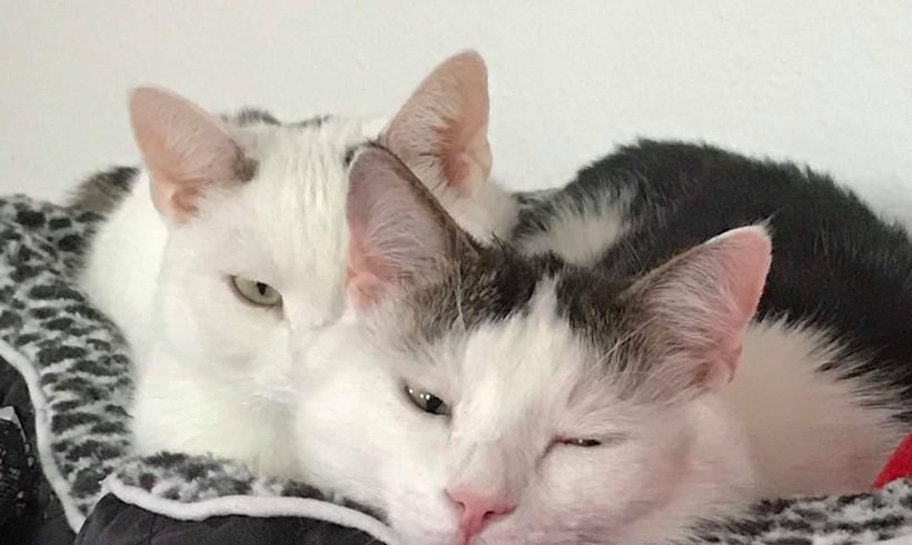 Happy home: Dreamer und Crowley