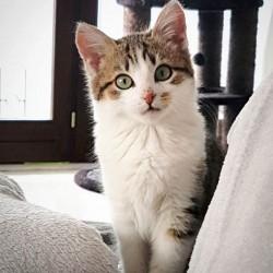 Katze889_Nala2