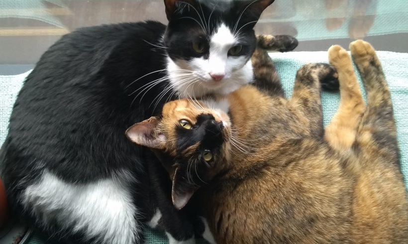 Grüße aus dem neuen Zuhause: Merle und Nami (Lila und Miki)