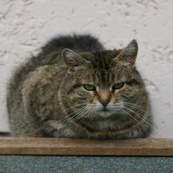 Geschenk für Katzenfans? – Unsere Patenschaften
