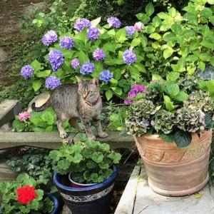 Katze908_Orlanda_Lisa3