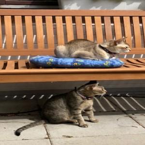 Katze908_Orlanda_Lisa5
