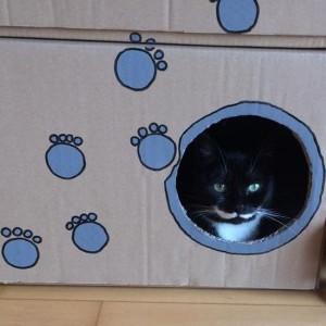 Katze916_Marie5