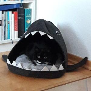 Katze916_Marie6