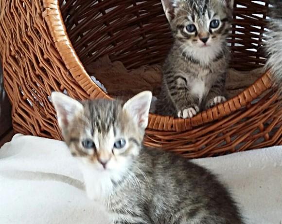 Lilly und Marlene