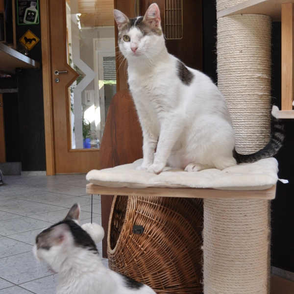 Labuta und Chiompi