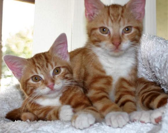 Bente und Ole