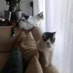 Lenny und Lewis: Grüße aus dem neuen Zuhause!