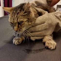 Ein typischer Katzenschutz-Tag
