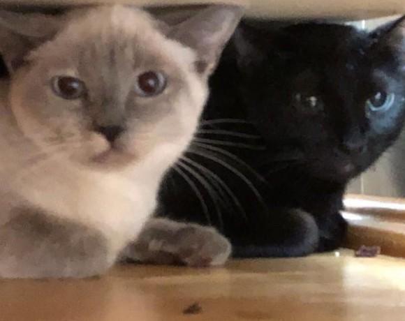 Nuri und Sina