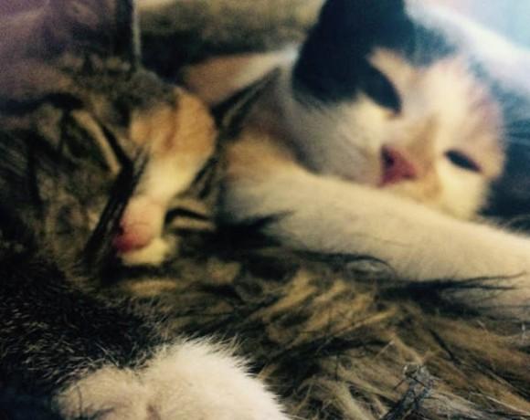 Mia und Khaleesi
