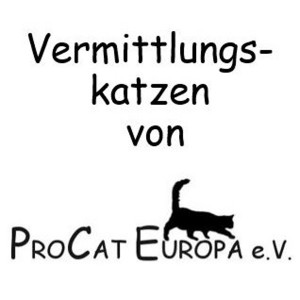 ProCat-Vermittlungskatzen2