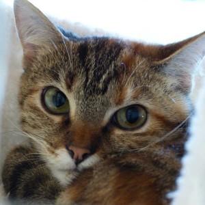 Katze1021_Minna2