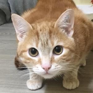 Katze1022_Garfield