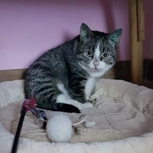 Katze1030_Muffin2
