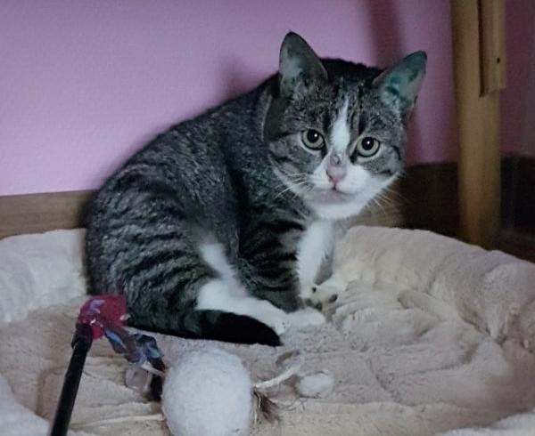 Muffin, unsere Grumpy Cat