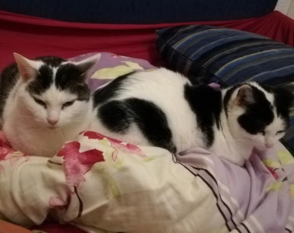 Sofie und Tiffy