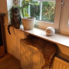 Katze995_Kuschel_Jamie4