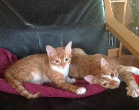 Leroy und Ziva