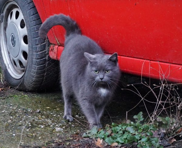 Streunerkatzen zum Verlieben: Werden Sie Valentins-Pate