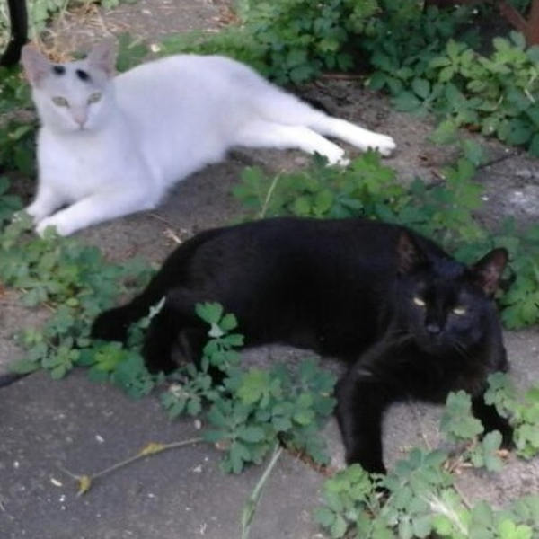 Toni und Janto