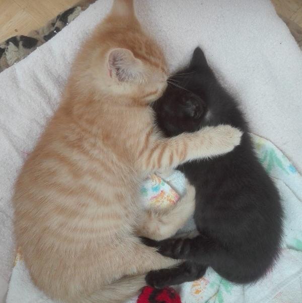 Pablo und Panther