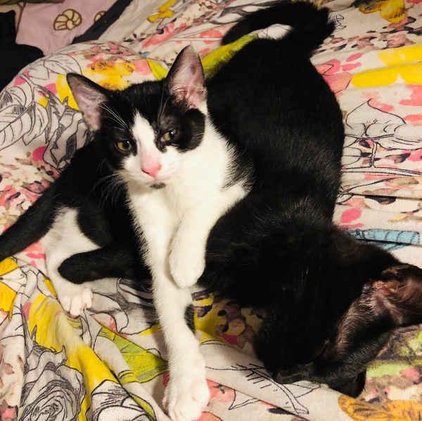 Tommi und Buddy
