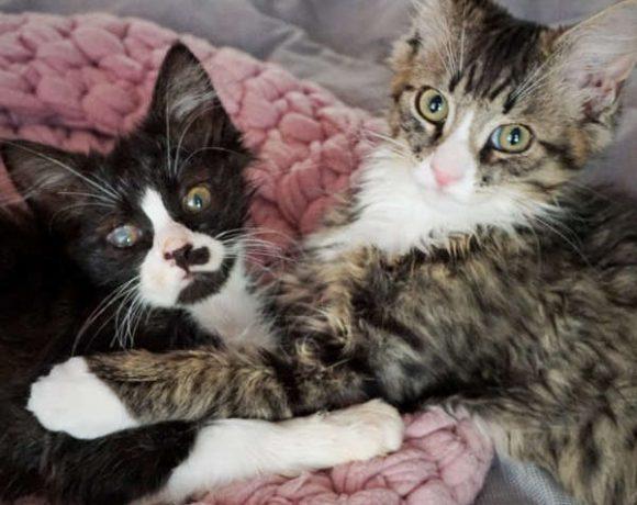 Tigger und Lou