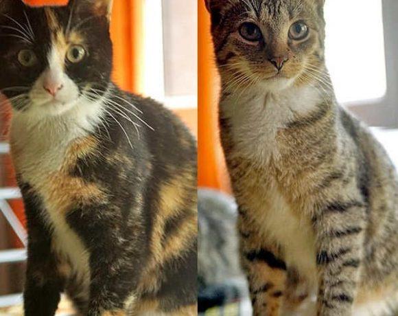 Bella und Fridolin