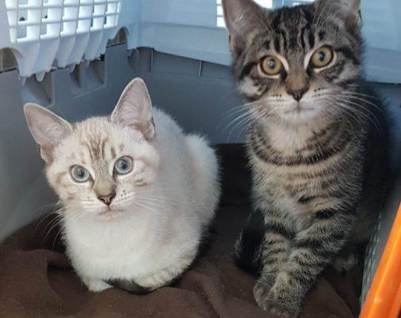 Hazel und Kuro