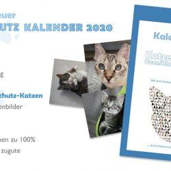Perfektes Timing rund ums Jahr: Der Katzenschutz-Kalender