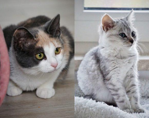 Minka und Snowball