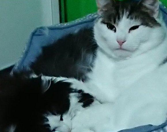 Mausi und Tommy