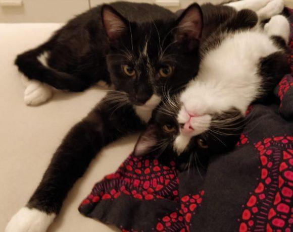 Sammy und Luna