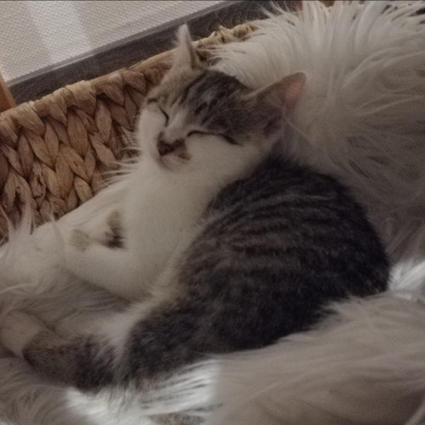 Nala und Yoshi