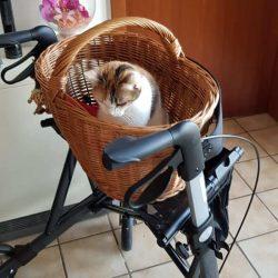 Senioren- und Katzenherz glücklich gemacht