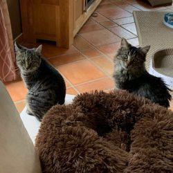 Neues Zuhause – Greta und Tami