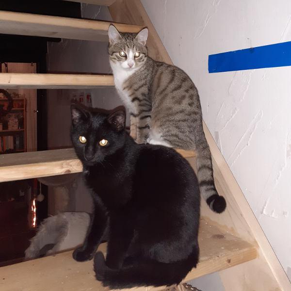 Nero und Nanuk