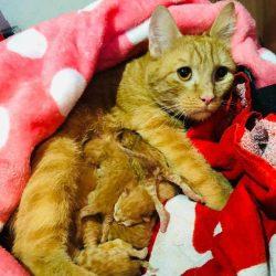 Die Katzenschutzarbeit endet nie …