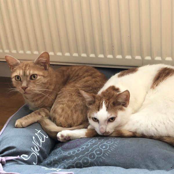 Toby und Garfield
