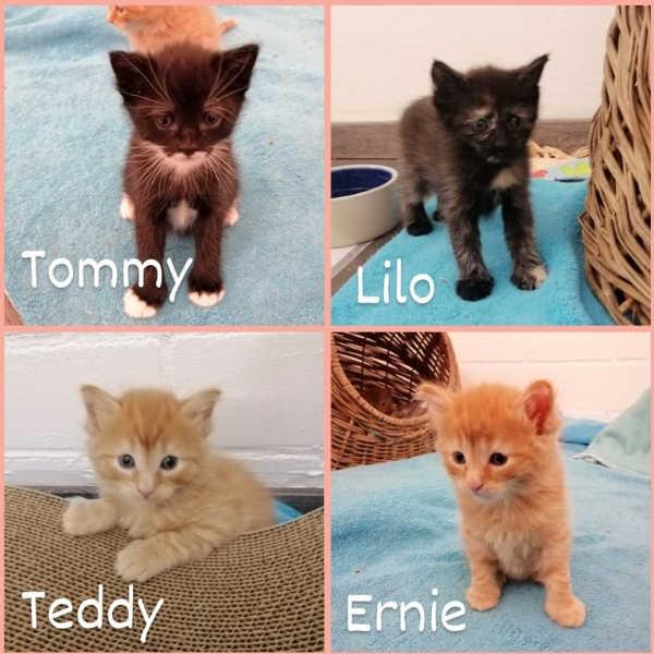 Lilo, Ernie, Teddy und Tommy